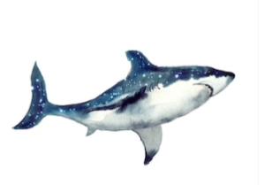 Omega Shark, พันทิป, pantip, รีวิว