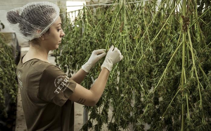 Cannabisvital Oil, ราคาเท่าไร, ราคา, อาหารเสริม